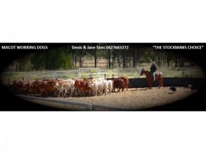 7 Mascot Working Dogs